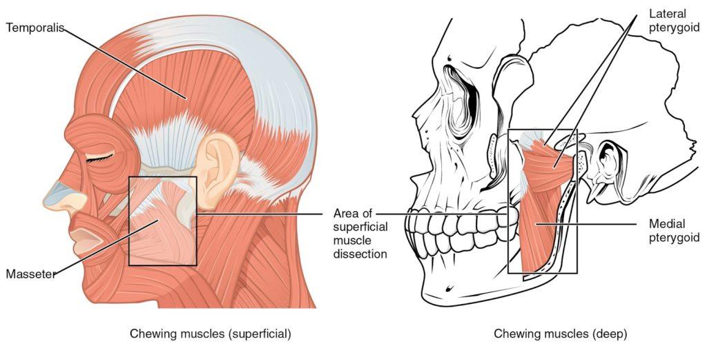ízületi fájdalom a fül előtt)